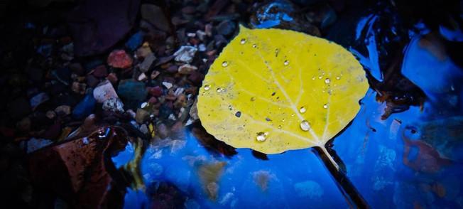 Single Leaf Project // Khosrow R. Shotorbani — Photography