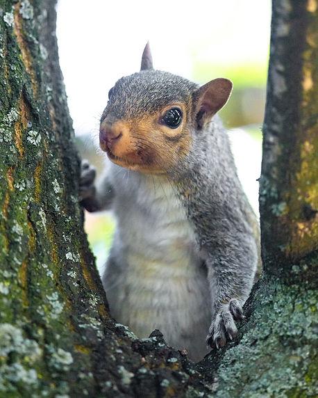 ucd squirrel small.jpg