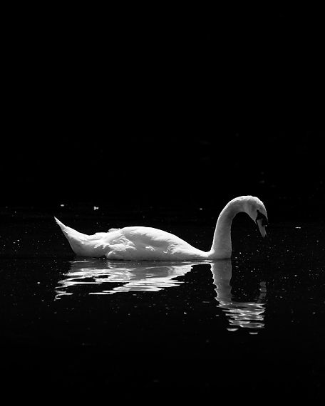 swan mono small