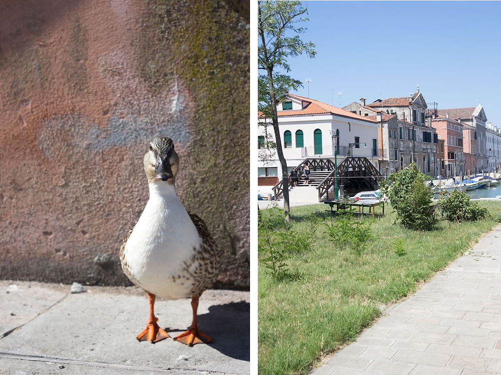 Best things to do on Giudecca | Venice / Venezia
