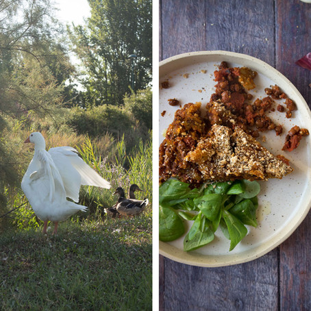A visit to Sant'Erasmo and a Vegetarian Pumpkin Pie Recipe