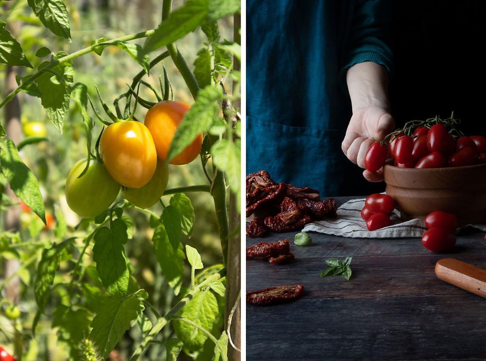 Italian datterini tomatoes