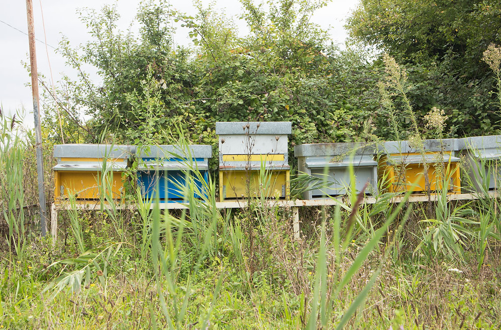 Beehive | Island of Vignole (Venice, Italy)