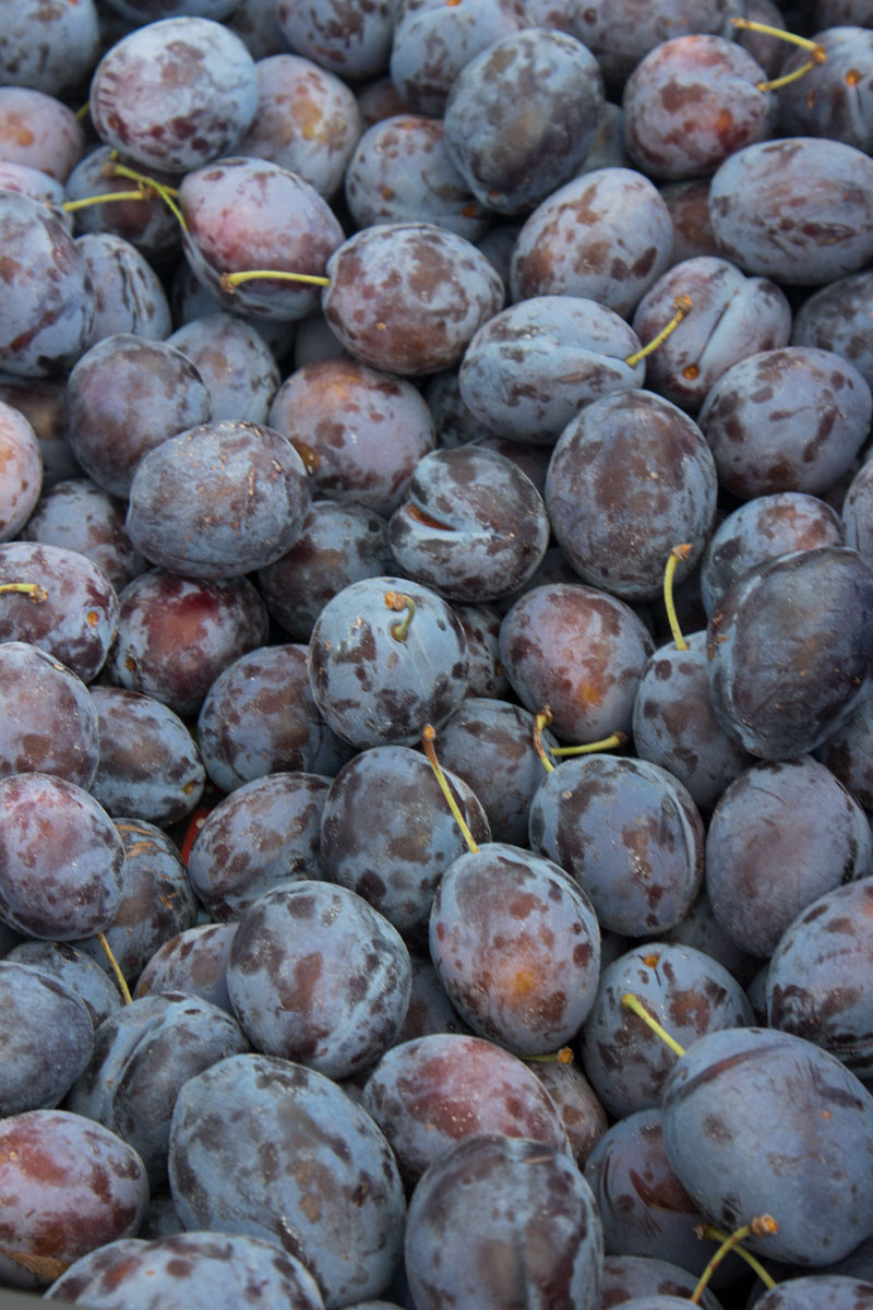 Lido of Venice | Farmers market | plums