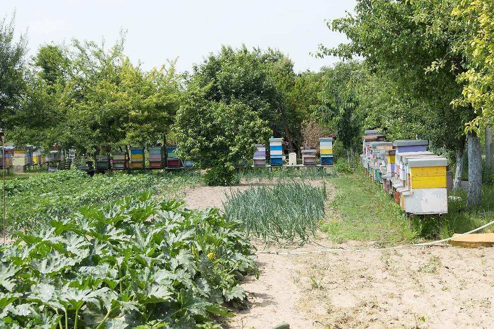 Venice Farms | Sant'Erasmo | Apiary