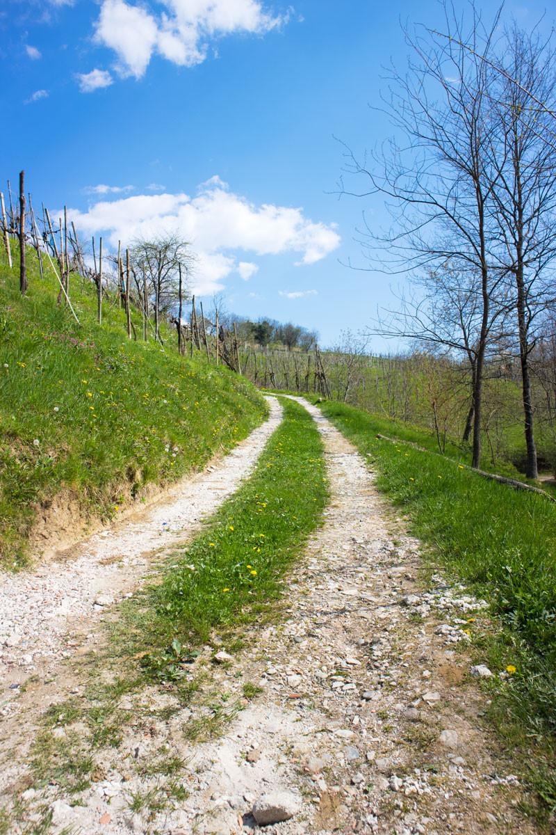 Conegliano hills