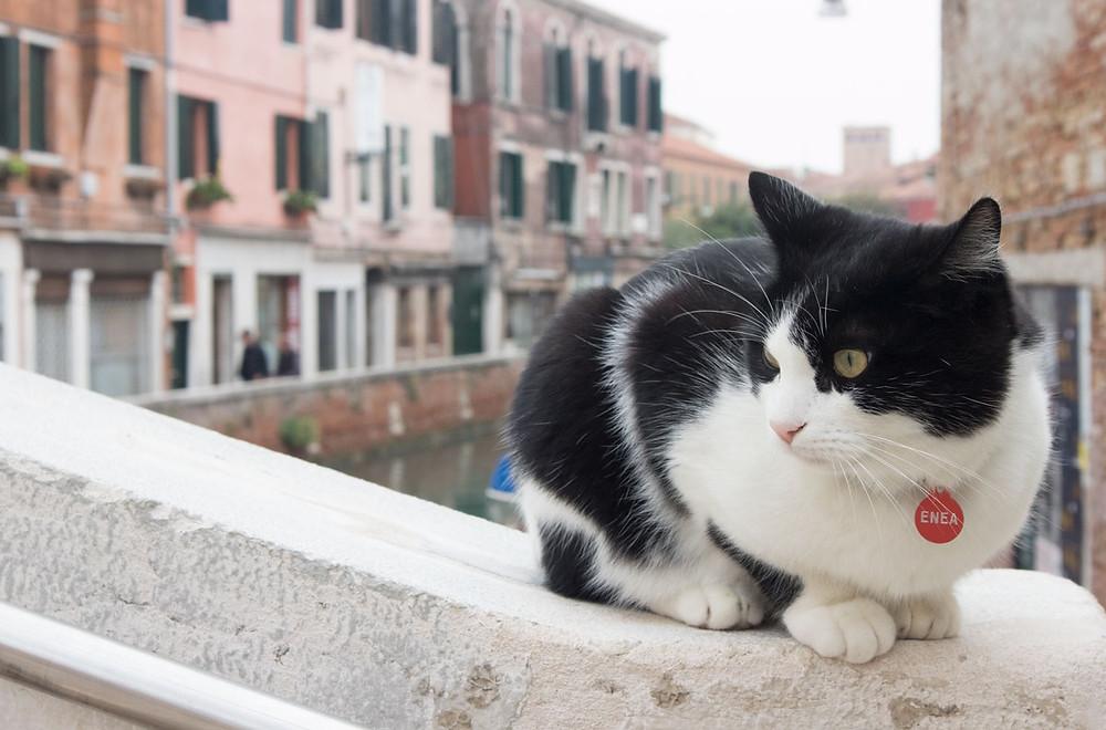 Venetian cats   Venice - Italy