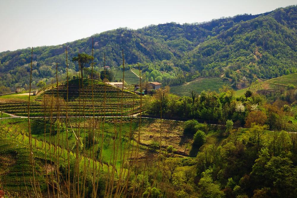 Conegliano hills, land of prosecco