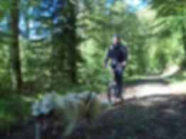 Cani-trottinette pawtrekker Attelages de la roche percée