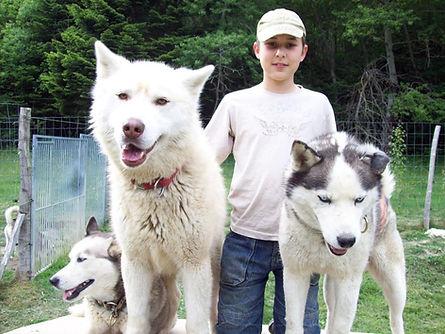 Les attelages de la roche percée visites découvertes du monde du chien de traineau