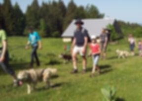 Les attelages de la roche percée cani-rando doubs chiens de traîneau
