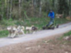 Kart unique en france chiens de traineau franche comté