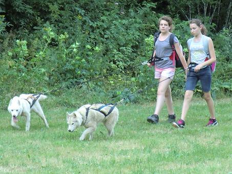 Cani rando chiens de traîneaux montagnes du jura Doubs les Attelages de la roche percée