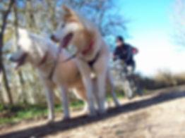 Les Attelages de la roche percée cani-trottinette