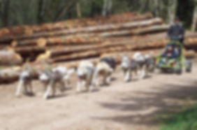 Kart à chiens traîneau à roues doubs