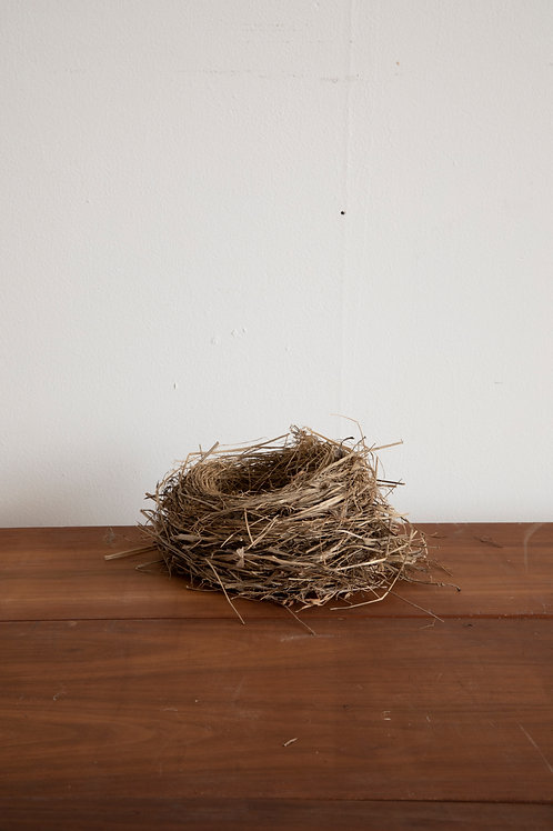 Dried Bird's Nest