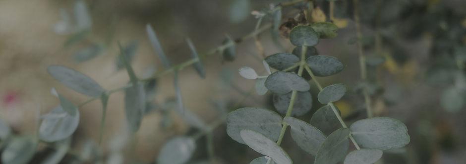 eucalyptus_edited_edited.jpg