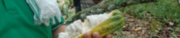 Cacao Farmers Trading Colombia