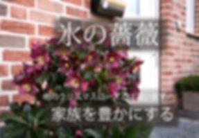 Ice N' Roses Red 氷.jpg