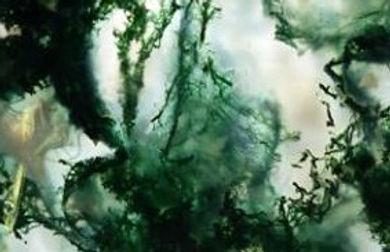 Chakras et minéraux,minéraux et couleurs.Fluorite vert,amazonite, aventurine,malachite, émeraude, chrysocolle, apophyllite, apatite verte, chrysoprase, épidote, héliotrope, chakra coeur, self contrôle, espoir, sincérité, harmonie, équilibre, couleur de guérison, apaise les émotions fortes