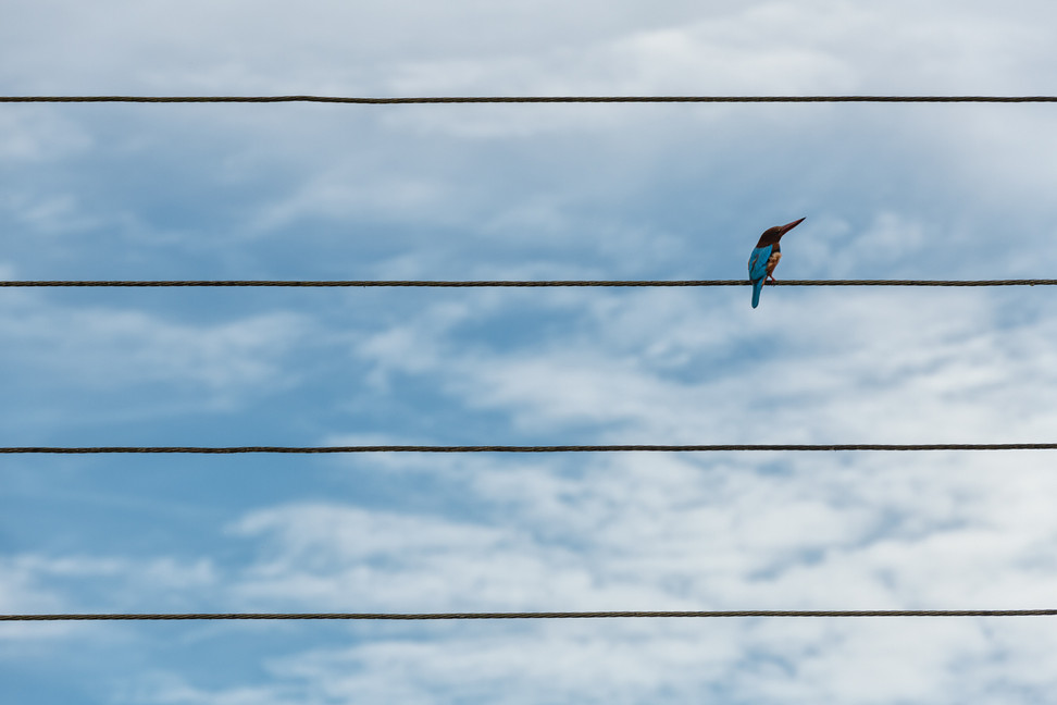 King on a wire
