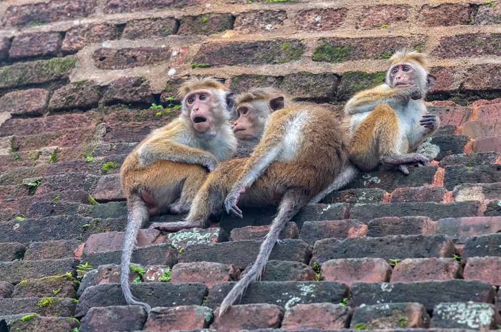 Three little monkies