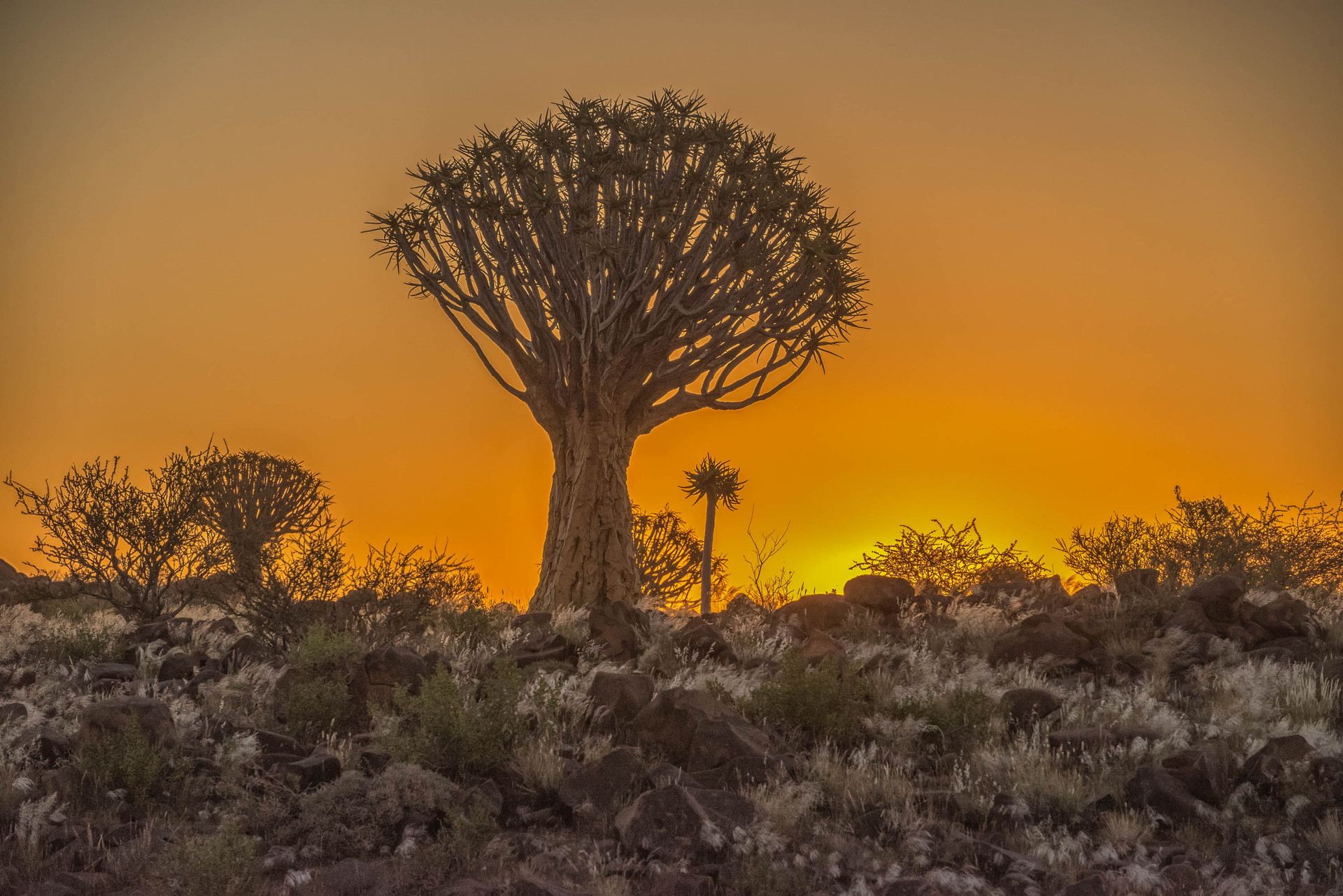 Golden Quiver Trees