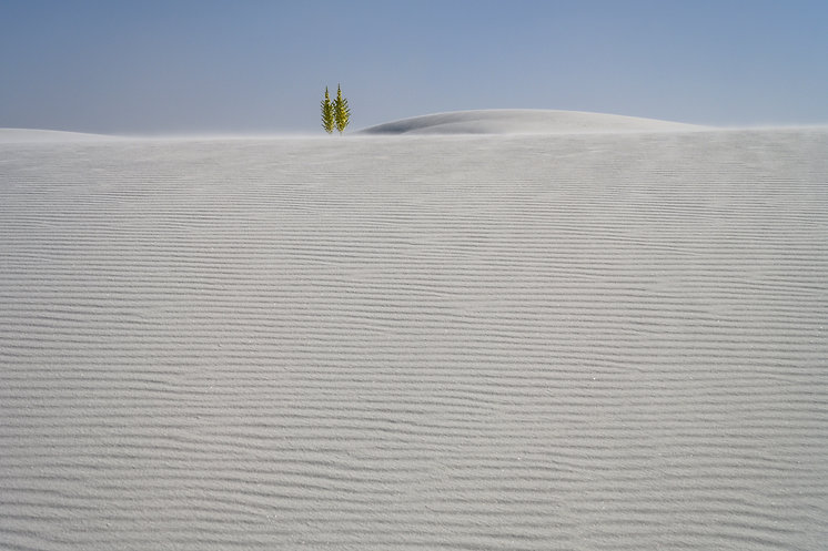 White Sands, New Mexico, Yucca plants
