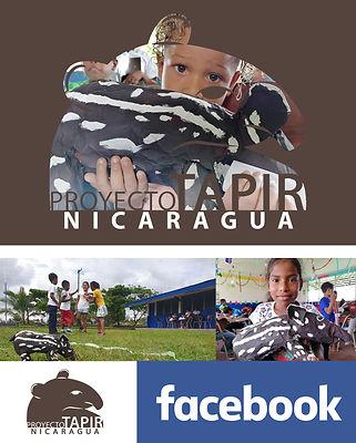 Tapir Nicaragua.jpg