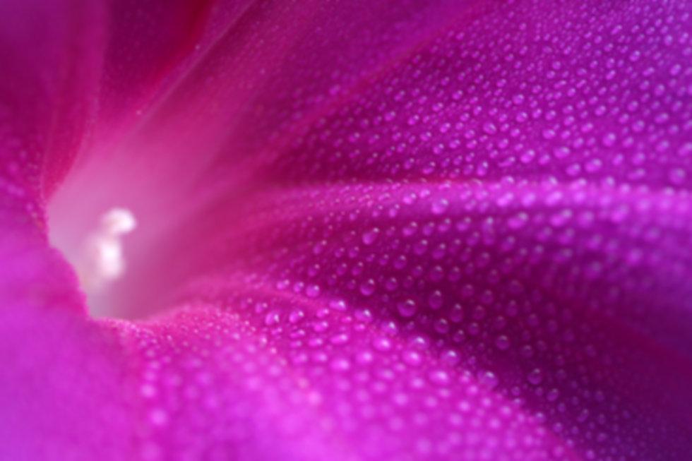 dreamstime_l_15630906.jpg