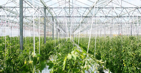 WHY THE READILY AVAILABLE CHEMICAL FERTILIZER AND PESTICIDES ADDED FARMING METHOD IS NOT THE
