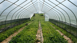 HOW MODERN TECHNOLOGIES CAN ASSIST ORGANIC FARMING AND ITS EFFECT IN CURING THE FOOD CRISIS