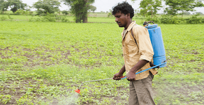 WHY THE READILY AVAILABLE CHEMICAL FERTILIZER AND PESTICIDES ADDED FARMING METHOD IS NOT THE ANSWER