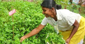MODERN DAY ORGANIC FARMING FOR AGRICULTURAL SELF SUFFICIENCY AND INCREASED PRODUCTIVITY