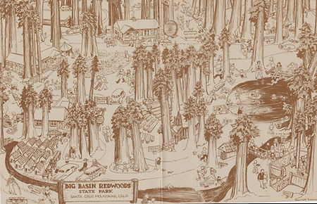 "Big Basin Redwoods State Park, as drawn by Harriett ""Petey"" Weaver"