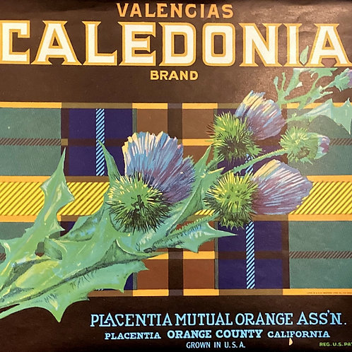 Caledonia Crate Label, Placentia Mutual Orange Ass'n