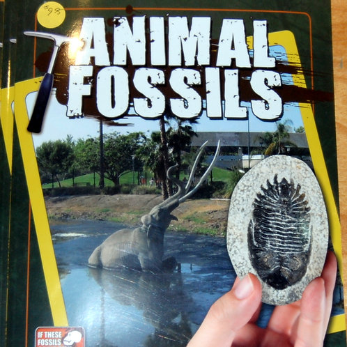 Animal Fossils by Natalie Hyde