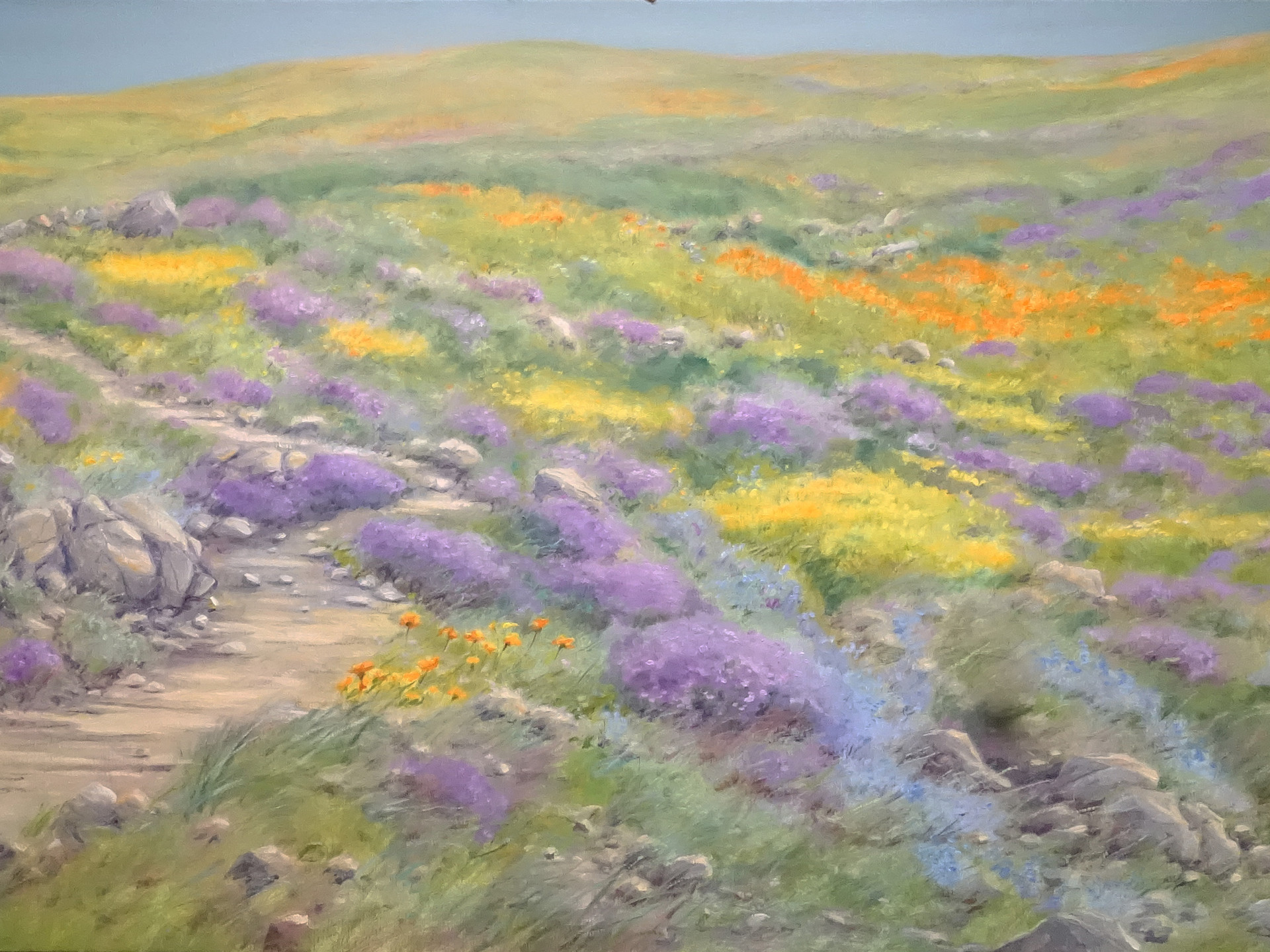 Namaqualand flowers in the desert (2) 160x90 cm