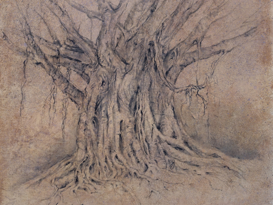 Wild Figtree Clanwilliam South Africa  70x70 cm