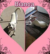 Bianca.jpeg