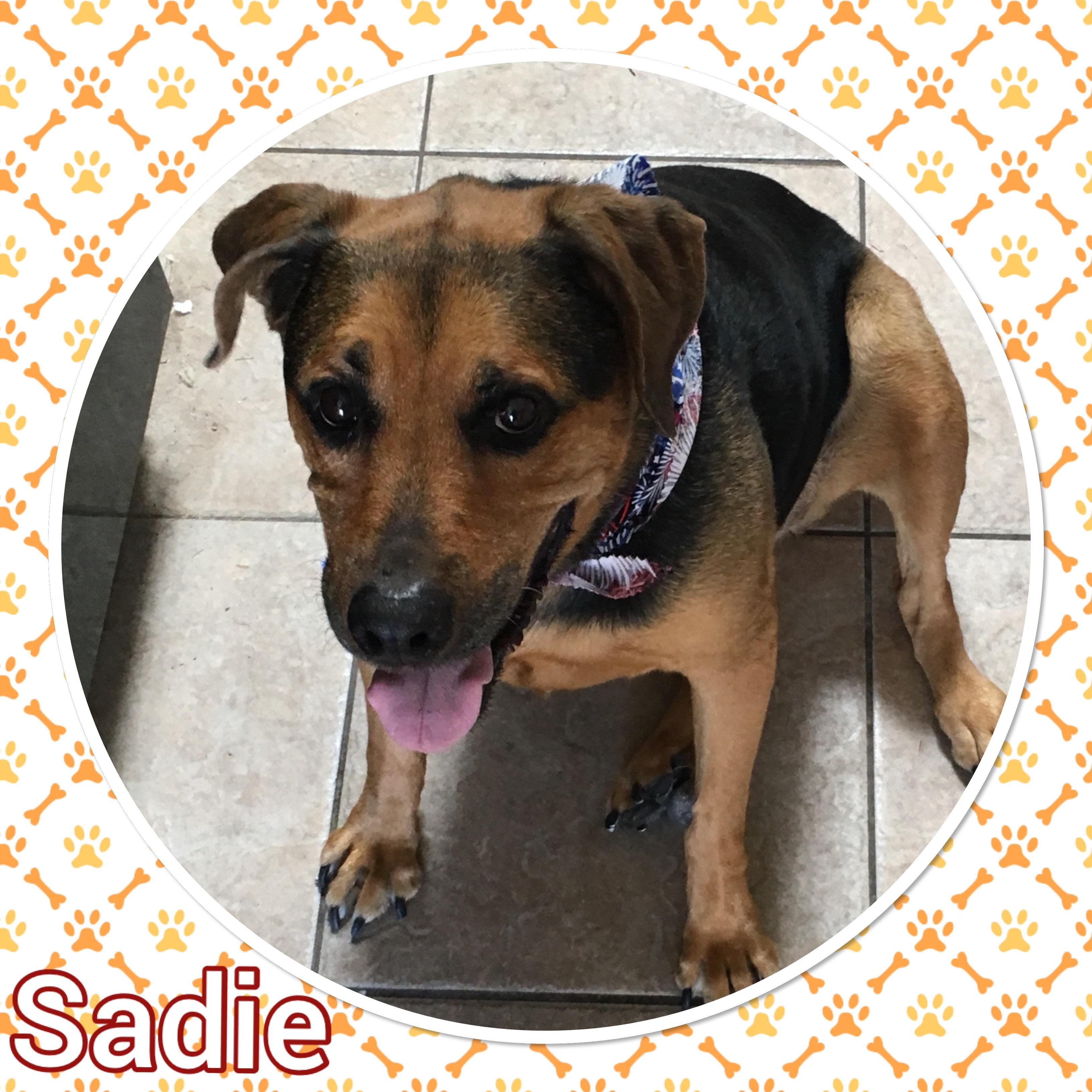 Sadie A2P