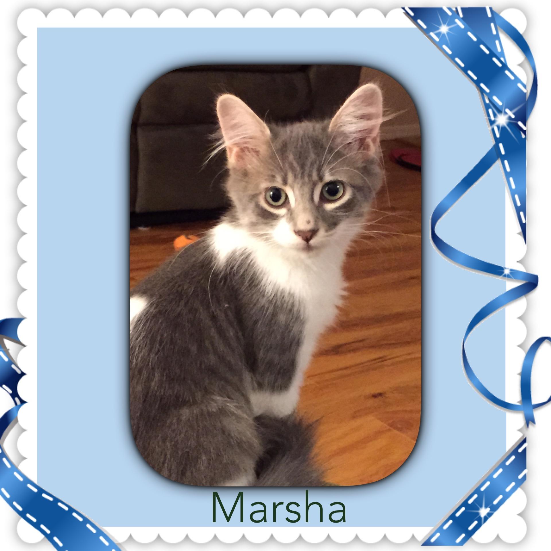 marsha 1