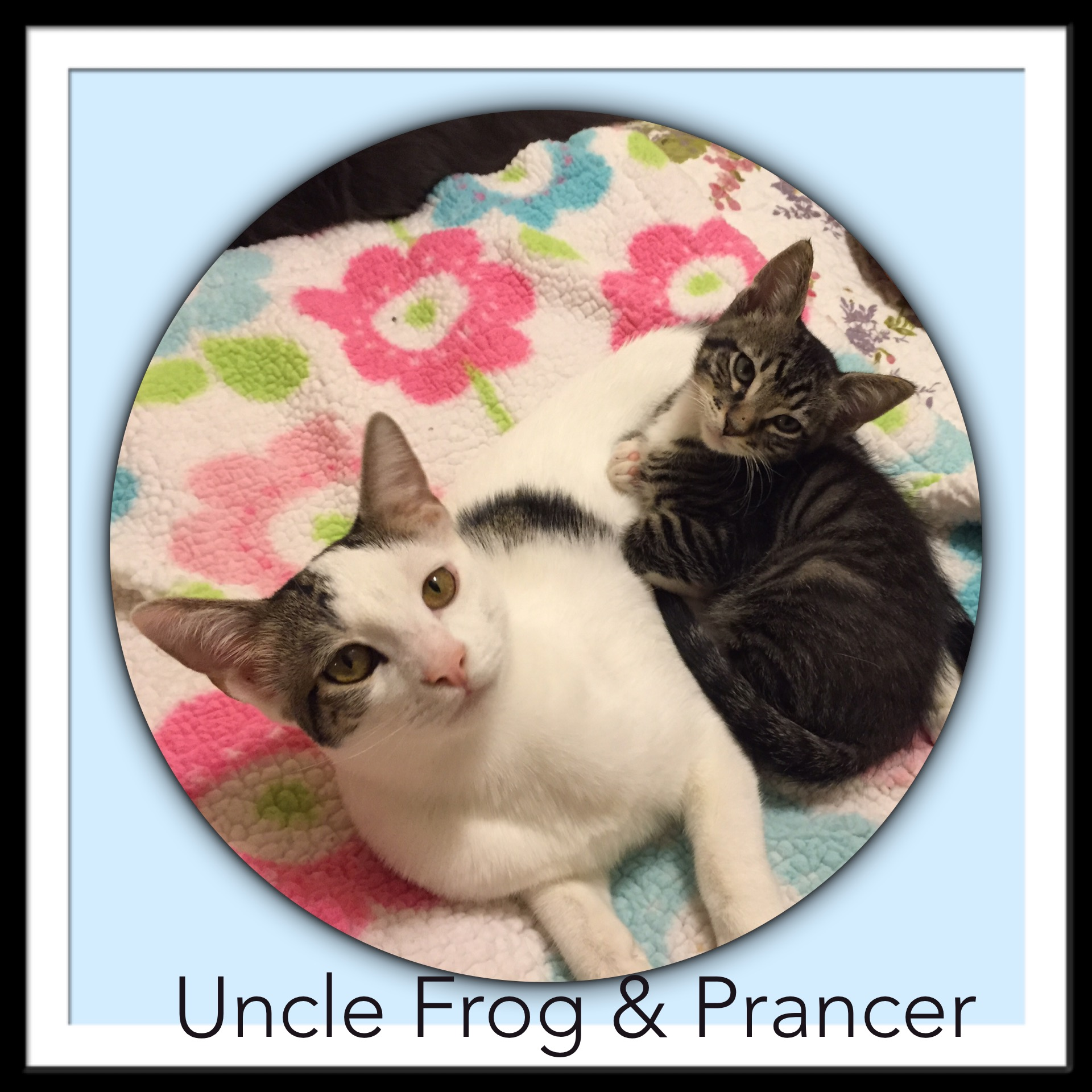 uncle frog and prancer