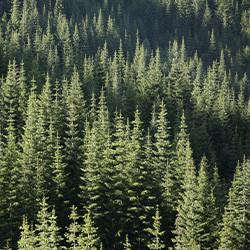 northern-timber-idaho_@1.jpg