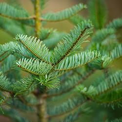 northern-timber-stewardship_@1.jpg