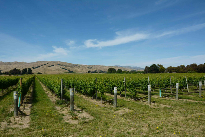Generic-marlborough-landscape-longshot-r