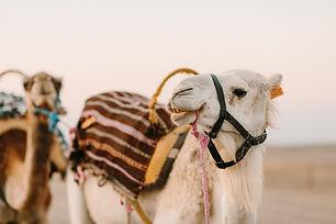 Desert-198.jpg