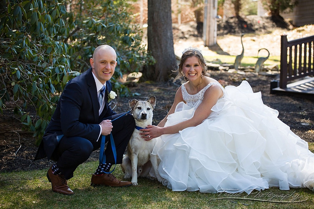 Dogs in weddings, connecticut wedding planner