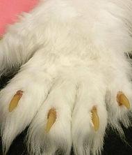 claws3.jpg