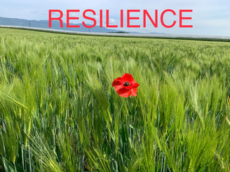 #COVID19 #Resilience: 10 Questions to Evaluate your Resilience